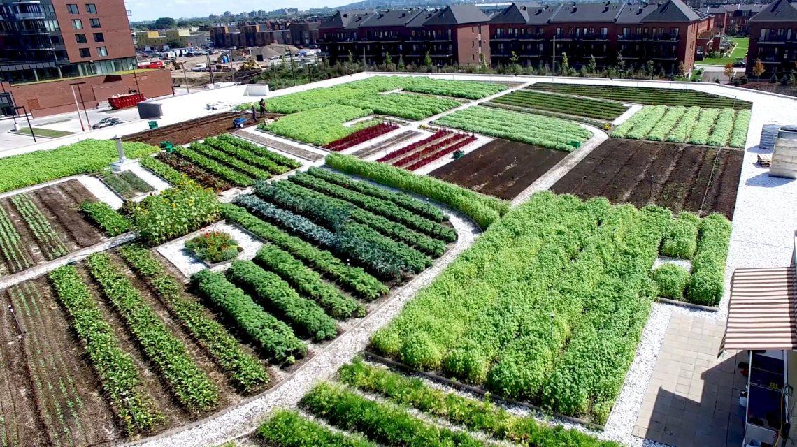L\'agriculture urbaine pourra-t-elle nourrir les habitants des villes?